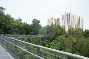 Ballade dans la canopée de Singapour