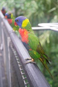 Lory Loft à Jurong Bird Park à Singapour